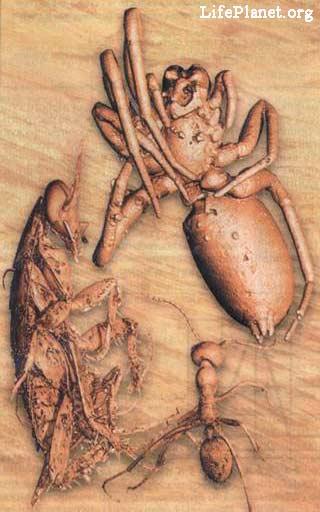 членистоногие мелового периода в янтаре