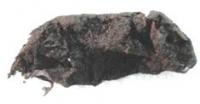 Мумифицировавшийся во льдах лемминг хорошо сохранился на протяжении 200 тысяч лет