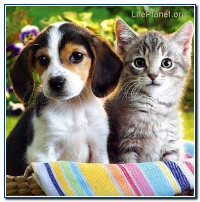 Щенок и котёнок