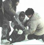 Обследование медвежонка.