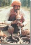 Как этот заклинатель змей из Джайпура, все представители столь древней профессии умеют с помощью музыкальной дудки подчинять своей воле даже опаснейшую кобру.
