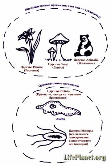 Современная классификация живого мира