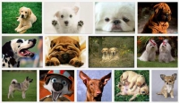 Выбор собаки