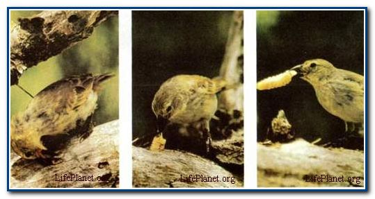 Живая планета : Возникновение и эволюция жизни : Горнила эволюции.