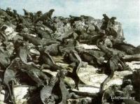 Морские игуаны (Amblyrhynchus cristatus) изобилуют на берегах Галапагосских островов. Единственная из существующих ныне ящериц, добывающая пищу в море, морская игуана, по-видимому, эволюционировала из близкой ей галапагосской игуаны. Как и наземные игуаны, эти морские ящерицы вегетарианцы, но питаются не наземными растениями, а водорослями. Наряду с другими адаптационными механизмами у них выработалась способность пить солёную воду; железы с обеих сторон носа помогают им избавляться от избытка солей.