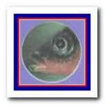 Окраска глаз самца трехиглой колюшки — часть брачного одеяния. Ярко-зеленая окраска глаз контрастирует с красным  цветом  брюшка. остальное время расцветка их неяркая и в воде почти неразличима.