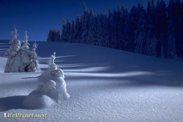 Декабрьский снег